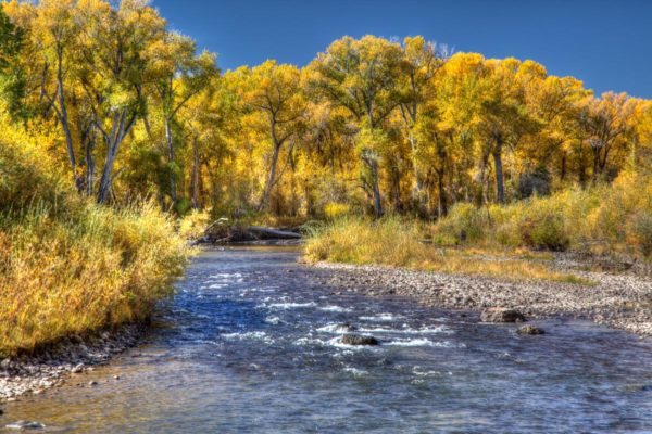 Picture of the lower Conejos River in October near Antonito, Colorado.